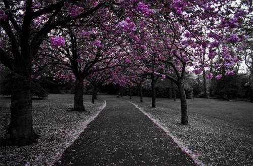 Примеры черно-белых фотографий с вкраплениями цвета - 2