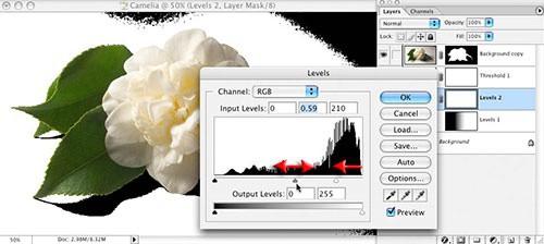 Шаг 6: Используйте средство «Порог», чтобы сделать все пиксели ниже цветка черными